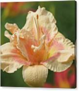 Lily Flower - Daylily Canvas Print