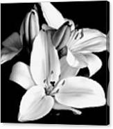 Lily Flower In Black And White Canvas Print