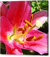 Lily Flower Pink Lilies Giclee Art Prints Baslee Troutman Canvas Print