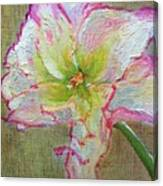 Lily From Paradise Canvas Print