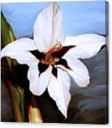 Lily I Canvas Print