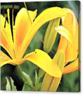 Lily - Id 16217-152018-5631 Canvas Print