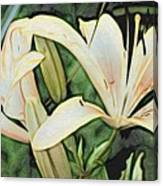 Lily - Id 16217-152054-3169 Canvas Print