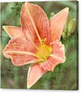 Lily In A Haze Canvas Print