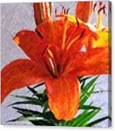 Lily In Color Pencil Canvas Print