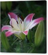 Lily In The Dark Canvas Print