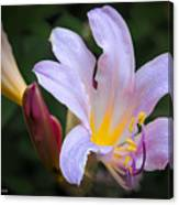 Lily In The Rain By Flower Photographer David Perry Lawrence Canvas Print