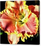 Lily Magic Canvas Print