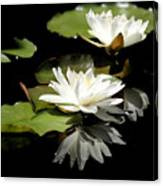 Lily Of The Lake Watercolor Canvas Print