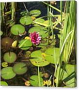Lily Pad Pond In High Noon Sun Canvas Print