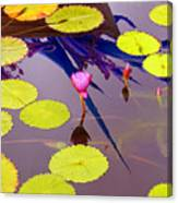 Lily Pads 2 Canvas Print