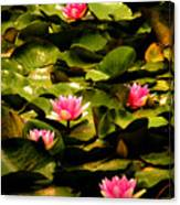 Lily Pads Above Sunken Treasure Canvas Print