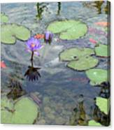 Lily Pads And Koi 1 Canvas Print