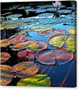 Lily Pads At Sunset Canvas Print