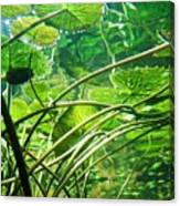 Lily Pads I Canvas Print
