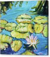 Lily Pads Mo Botanical Garden I Canvas Print