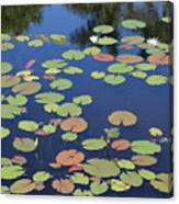 Lily Pads On Blue Pond Canvas Print
