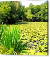 Lily Pond #4 Canvas Print