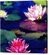 Lily Pond Canvas Print