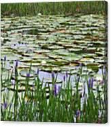 Lily Pond Panorama Canvas Print