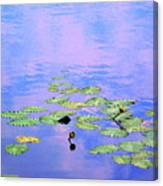 Laying Low Like A Lily Pond  Canvas Print