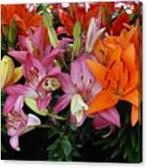 Lily Radiance Canvas Print