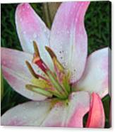 Lily Singled Out Canvas Print