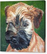 Lily, Soft Coated Wheaten Puppy Canvas Print