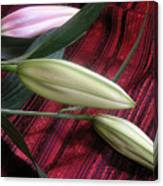 Lily Stem On Red Brocade Canvas Print