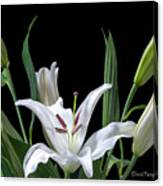 A White Oriental Lily Surrounded Canvas Print