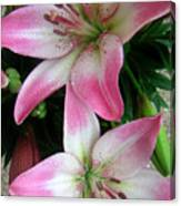 Lily Times Two Canvas Print