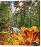 Lily Trail Canvas Print