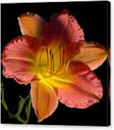 Lily With Bug Canvas Print