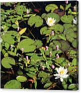 Lily Worlds Two Canvas Print