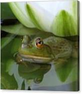 Lilyfrog - Frog With Water Lily Canvas Print