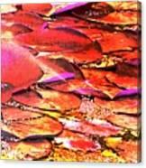 Crimson Lilypads Floating.. Canvas Print