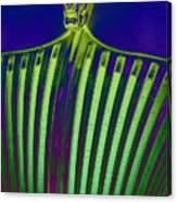 Lime Drop Canvas Print