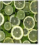 Limons Canvas Print