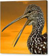 Limpkin At Sunset Canvas Print
