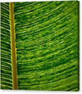 Lincoln Park Conservatory Palm Canvas Print