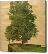 Linden Tree On A Bastion 1494 Canvas Print