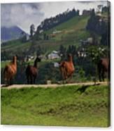 Line-dancing Llamas At Ingapirca Canvas Print