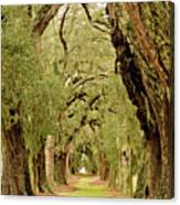 Line Of Oak Trees To Distance Canvas Print