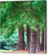 Line Of Pines Canvas Print