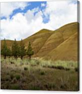 Line Of Trees At Painted Hills Canvas Print