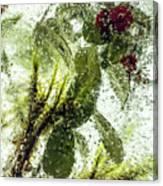 Lingonberry Canvas Print
