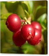 Lingonberry Canvas Print