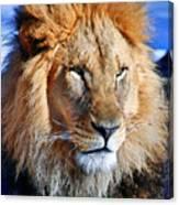 Lion 09 Canvas Print