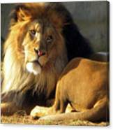 Lion 2 Washington D.c. National Zoo Canvas Print