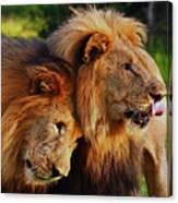 Lion 22 Canvas Print